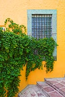 WindowGuanajuato1345